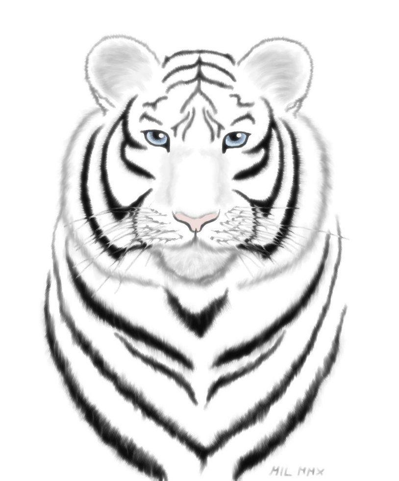 Картинки белого тигра для срисовки, добрым