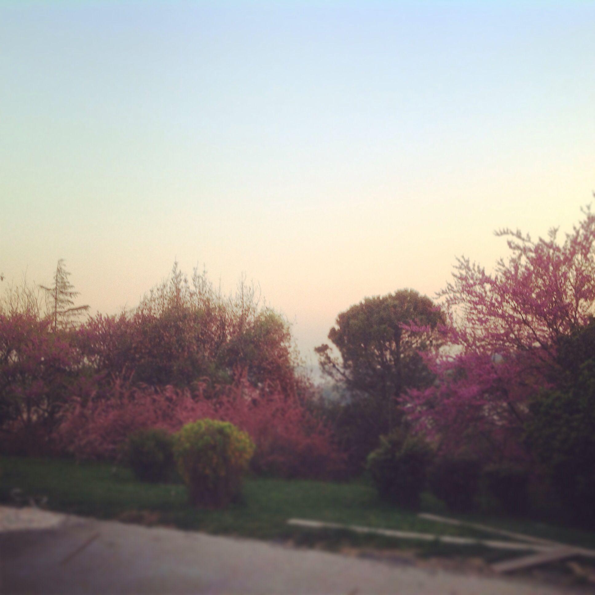 #sunset in #bogaziciuniversity #bosphorus #pinksky