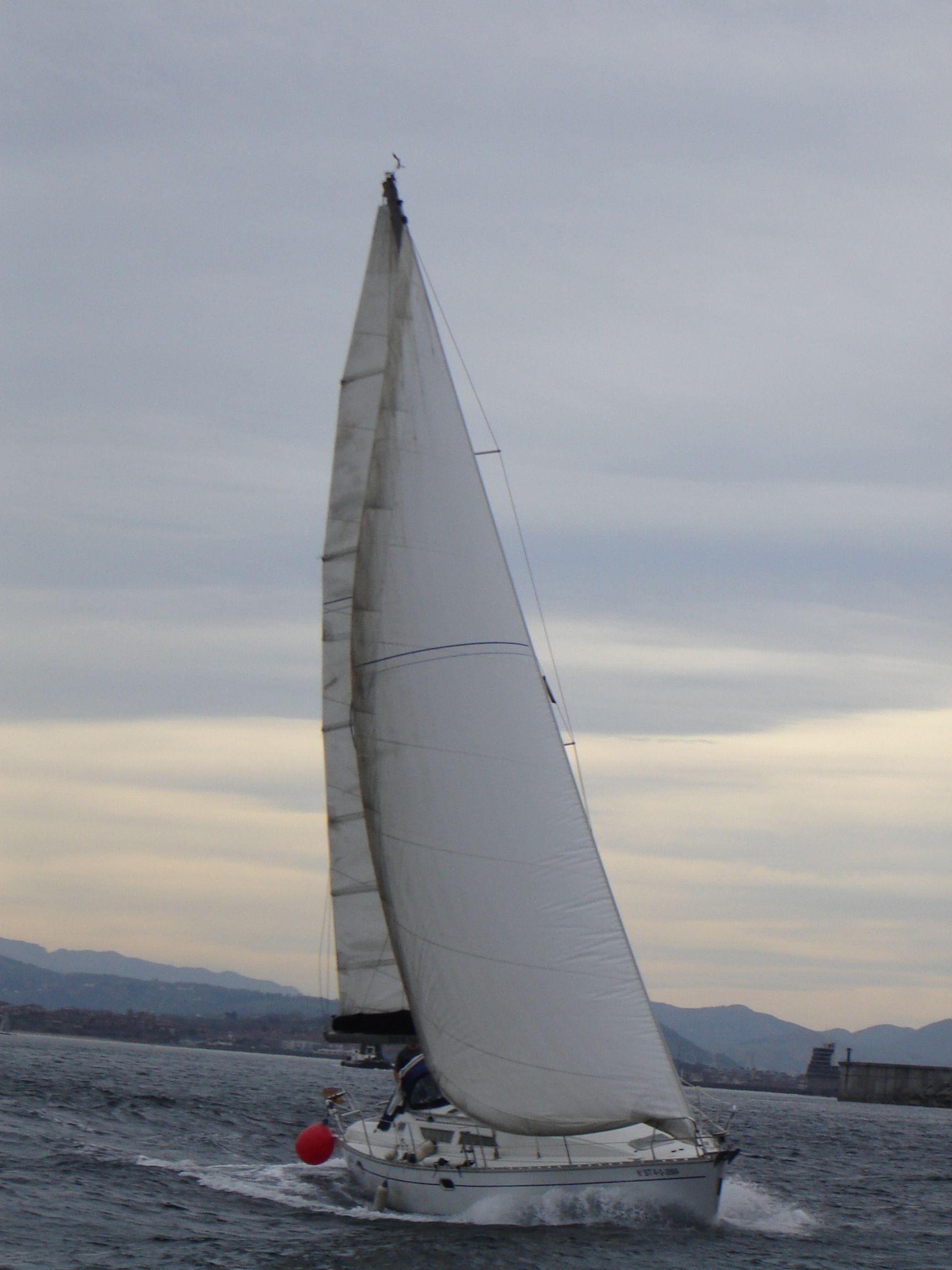 Navegando a vela por las costas cantabricas. Animals, Birds