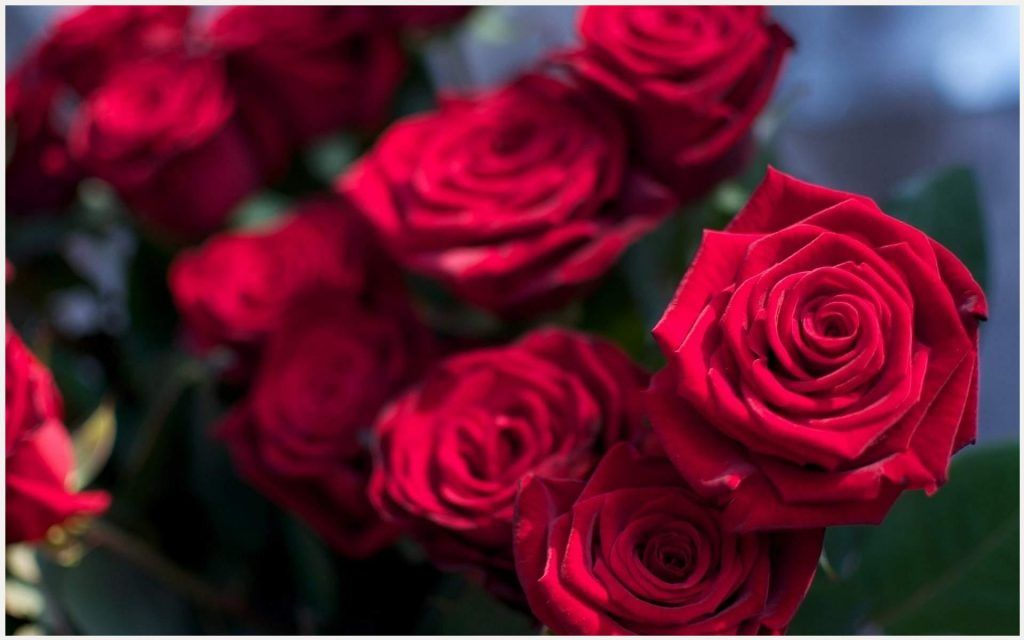 Red Roses Beautiful Wallpaper