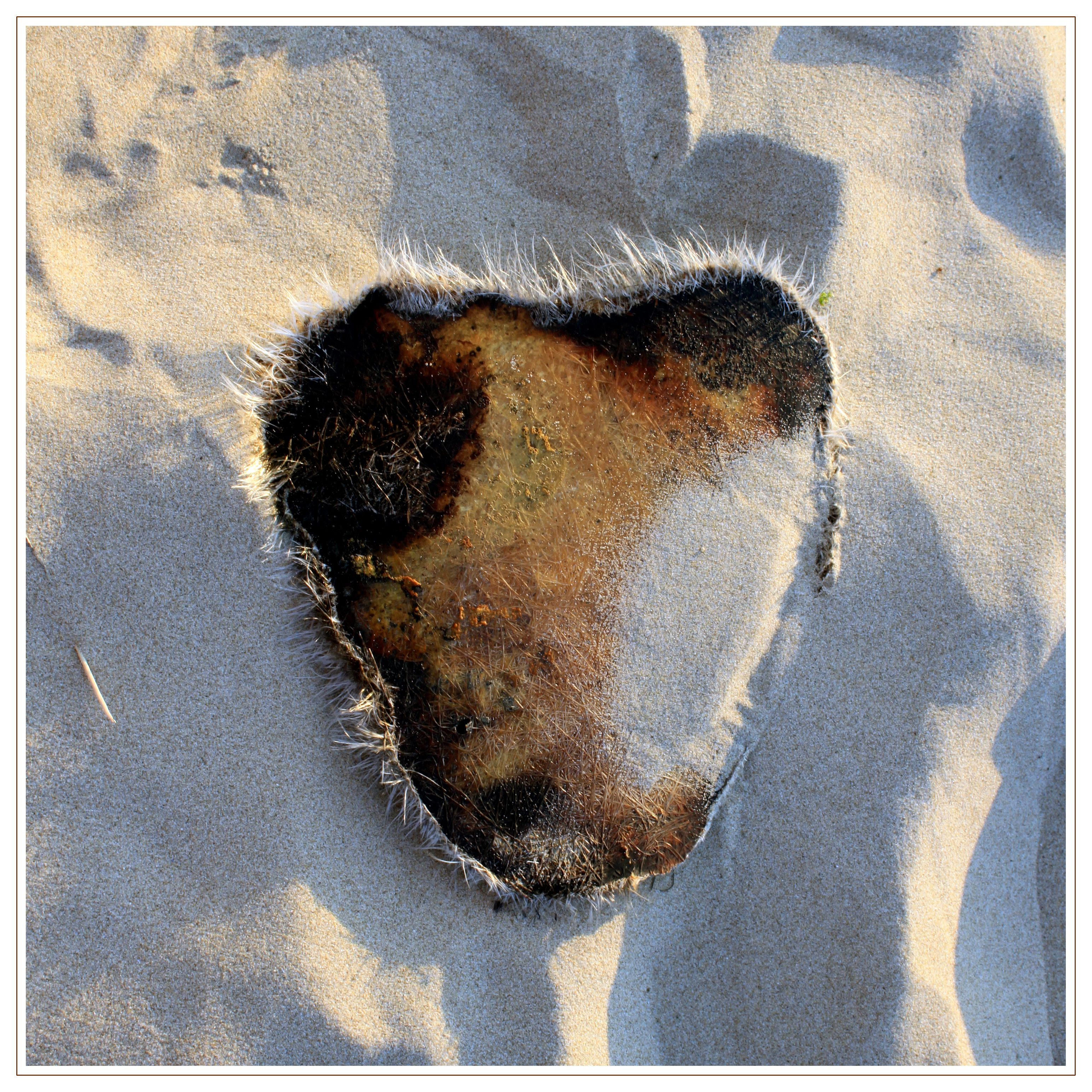 #heartshaped something, found on the #beach. Near #hargenaanzee and #schoorl.