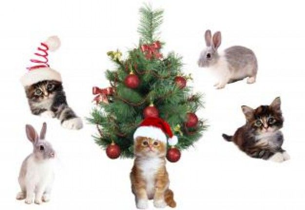 Pets at Christmas #Christmas #Dogs #Puppy #Cat #Snow