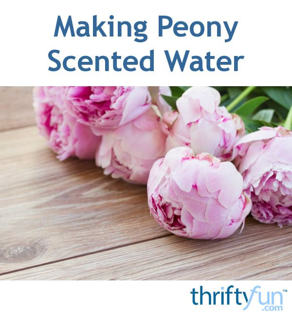 Making Peony Scented Water