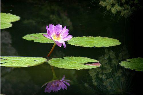 Fairchild Garden, Water Plants, Aquatic Plants, Plants ...