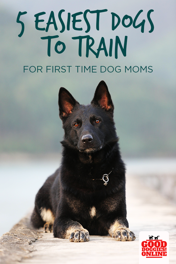 5 Easiest Dogs To Train For First Time Dog Moms Good Doggies Online Easiest Dogs To Train Dog Training Obedience Dog Training