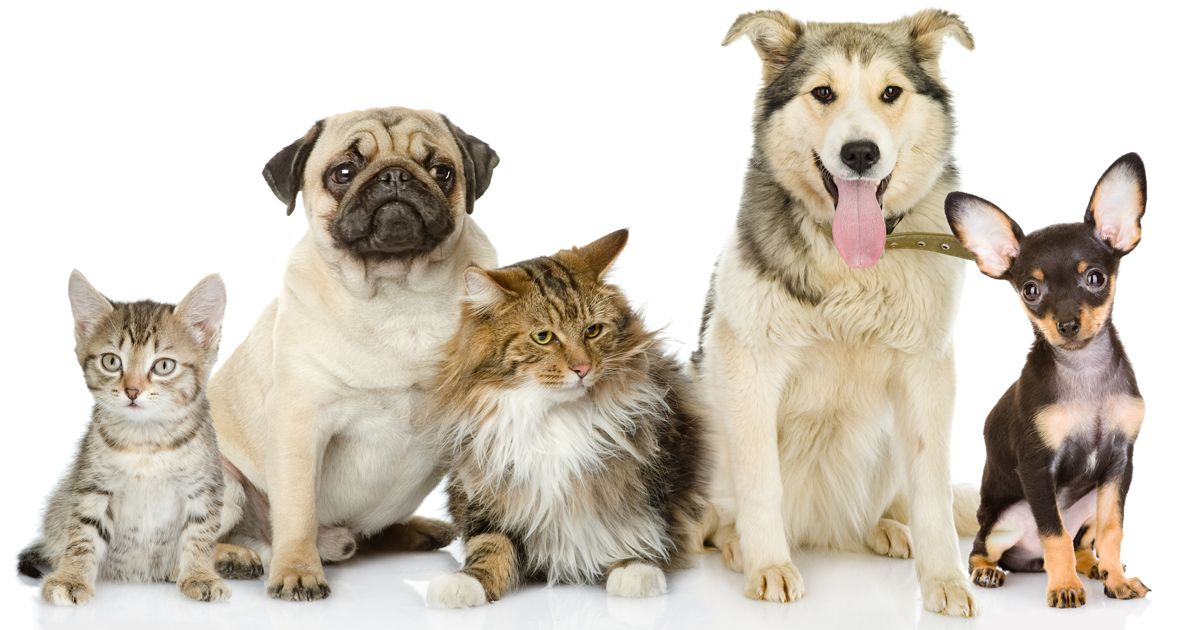 Study Ranks The Best Worst U S Cities For Pets Home Remedies