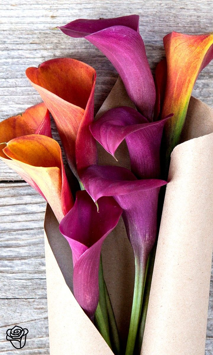 Brighten up anyones day the bouqs color inspiration pinterest brighten up anyones day with this gorgeous calla lily bouquet izmirmasajfo