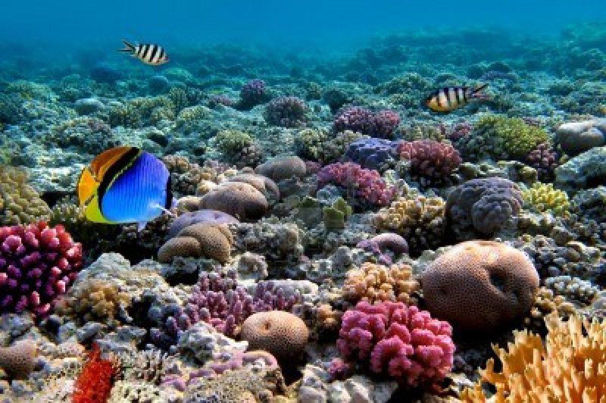 Photo D Une Colonie De Corail Sur Un Recif Mer Rouge Egypte Red Sea Sea And Ocean Sea World