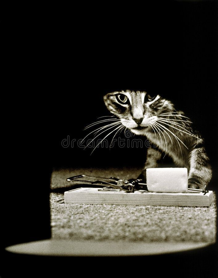 Mousetrap Hole Cat Cat looking into mouse hole with a mouse trap  Mousetrap Hole Cat Cat looking into mouse hole with a mouse trap  Mousetrap Hole Cat Cat looking into mo...