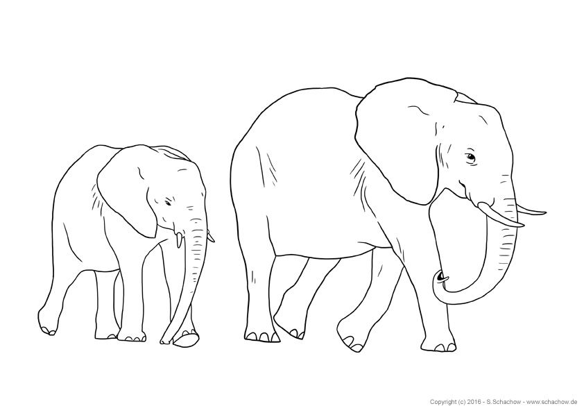 Elefantenbaby Zum Ausmalen