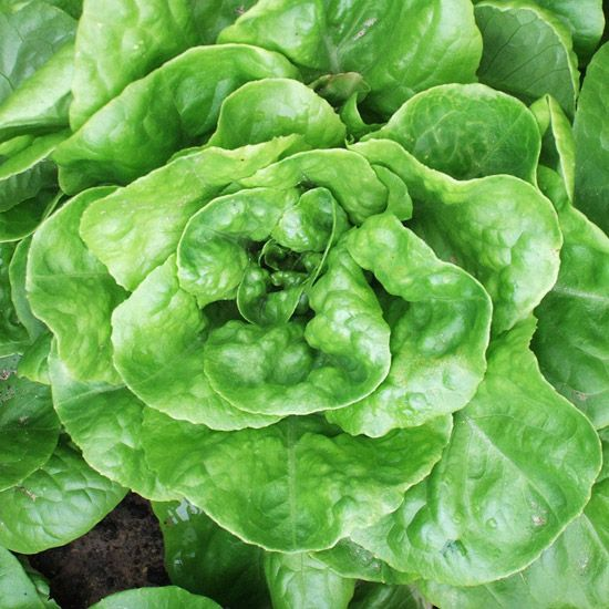 Veg Garden Fall Vegetables: Top Plants For Your Vegetable Garden For Homegrown Salads