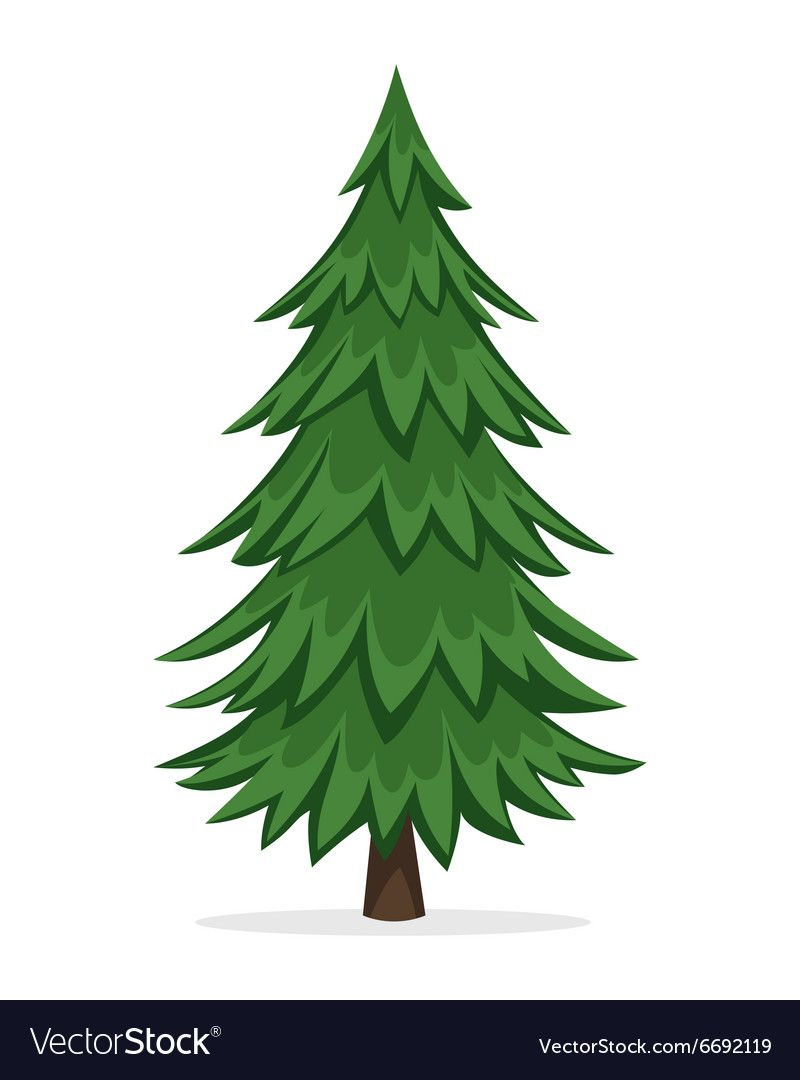 Cartoon Illustration Of The Pine Tree Download A Free Preview Or High Quality Adobe Illustrator Ai Eps Pdf Pine Tree Drawing Tree Drawing Tree Illustration