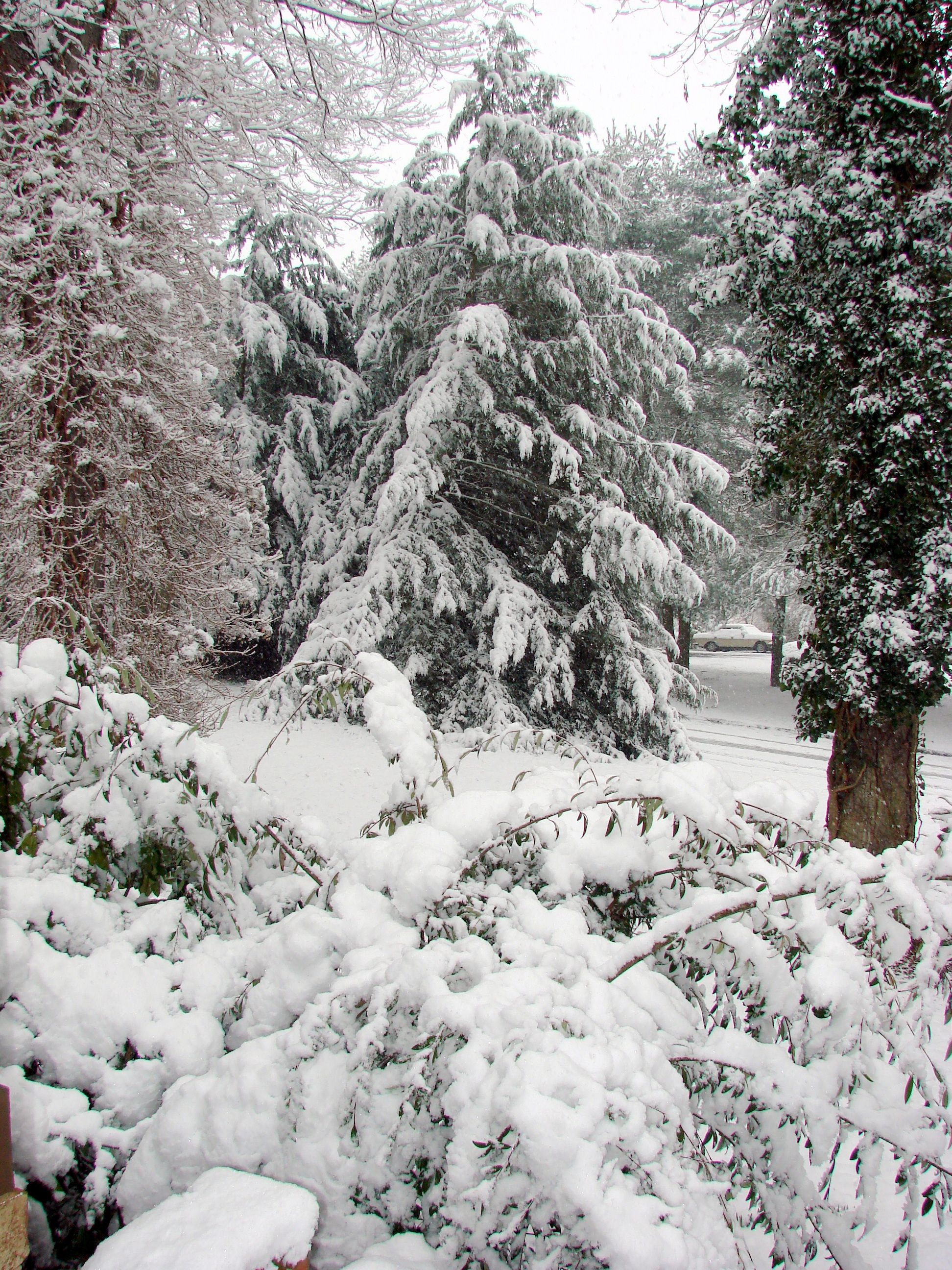 Winter in Maryland....  more pictures on http://www.majaskitchen.com