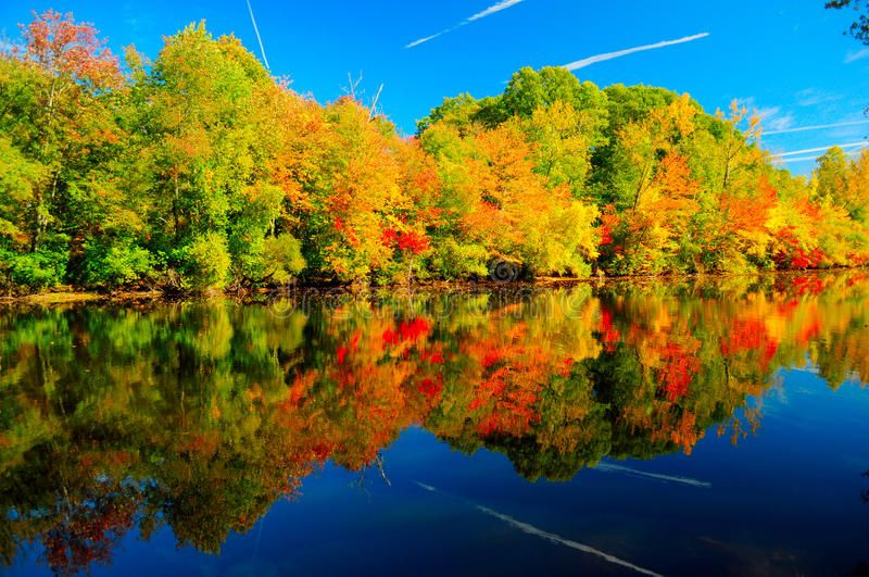 Beautiful autumn scenery of colorful foliage of fiery maple trees and a red carp , #AFF, #maple, #fiery, #red, #trees, #foliage #ad #autumnscenery
