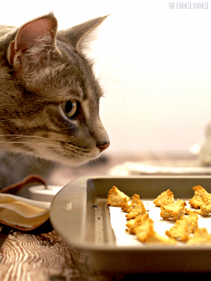 Homemade Salmon and Catnip Cat Treat Croutons! My cat