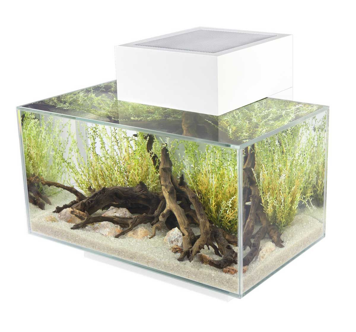Fish for aquarium online - Buy Online Fluval Edge Aquarium Set Led White 23ltr At Online Fish Store India Http