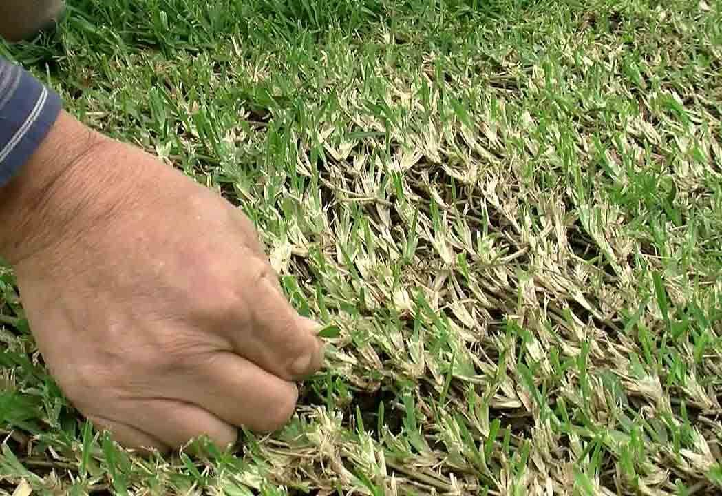Ecolawn Applicator top dressing review GCI TURF ... - YouTube
