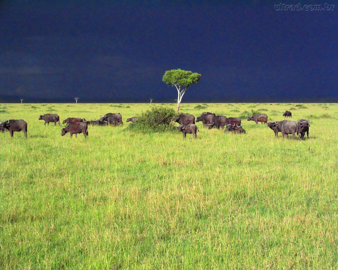Tempestade na Savana