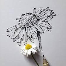 Bildergebnis Für Gänseblümchen Blüte Bleistift Zeichnung In My