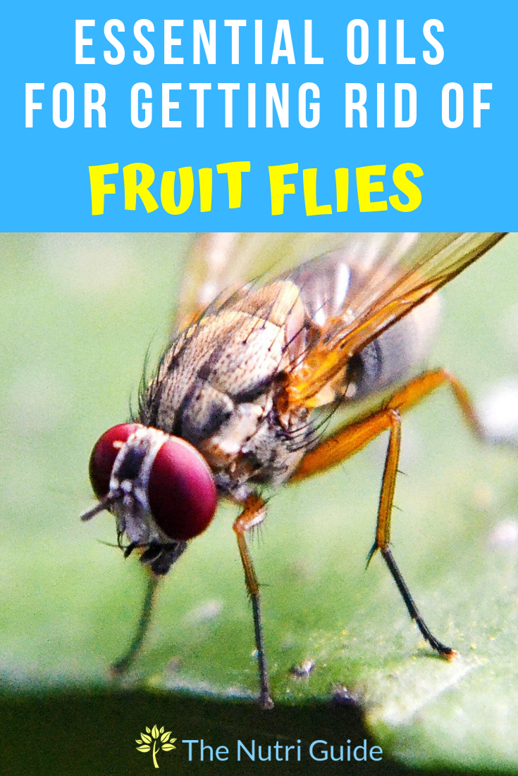 Essential Oils for Getting Rid of Fruit Flies & Gnats Learn DIY recipes for naturally getting rid of fruit flies and gnats in your home with essential oils. The chemical free way of getting rid of those little flying pests!Learn DIY recipes for naturally getting rid of fruit flies and gnats in your home with essential oils. The chemical f...