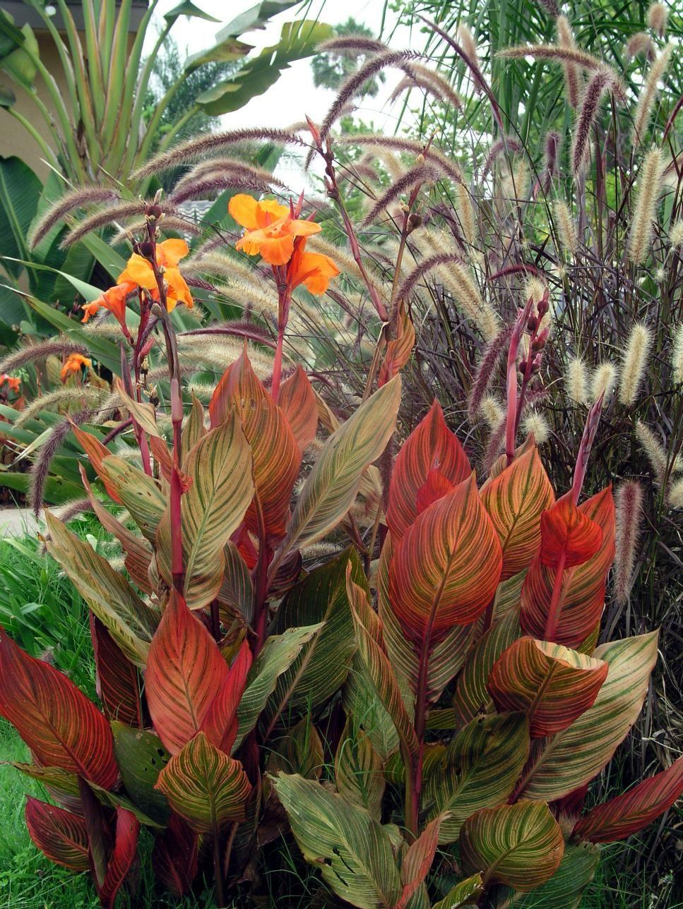 Beautiful Photos of Summer Gardens | Summer garden, Gardens and ...