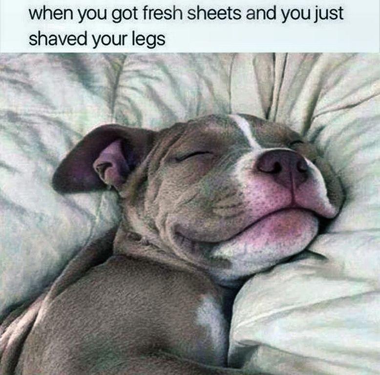 My thoughts exactly | funny | Pinterest | Blödsinn, Hunde und Fakten