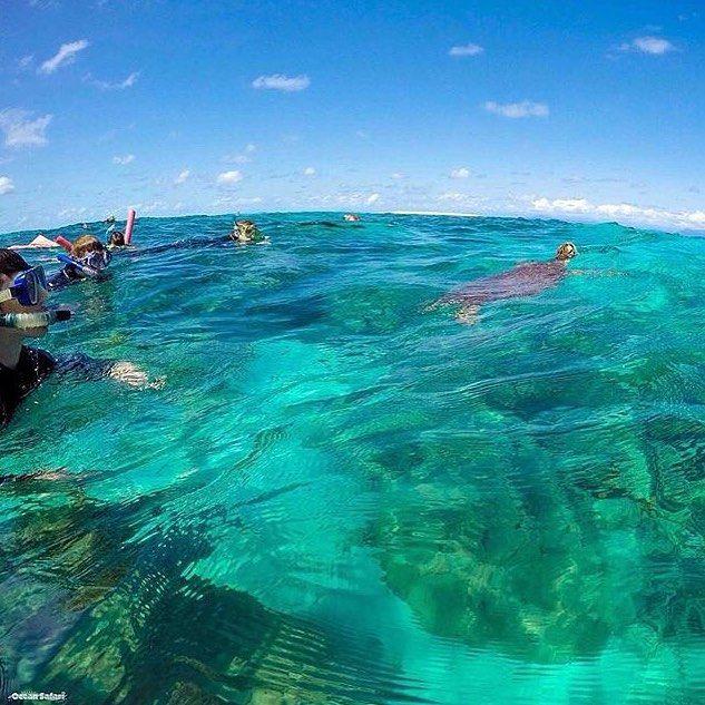 Crystal clear  #ozex #ozexperience #snorkelling #GreatBarrierReef #australia @gbrmarinepark by ozexperience http://ift.tt/1UokkV2