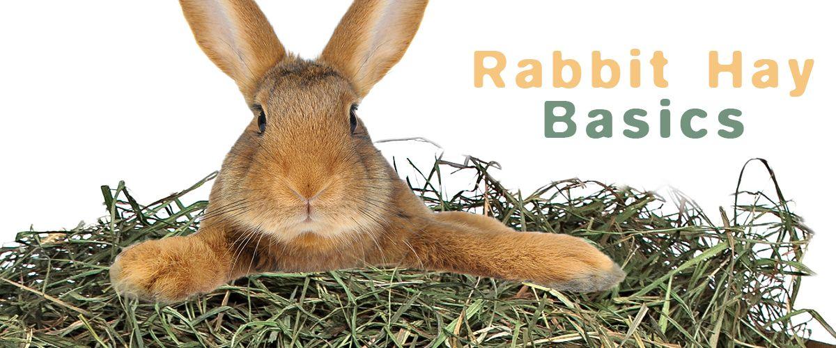 Rabbit Hay Basics Rabbit Pet Rabbit Pets