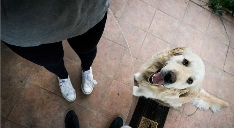 How To Stop Your Dog From Jumping On You Guests Training Your