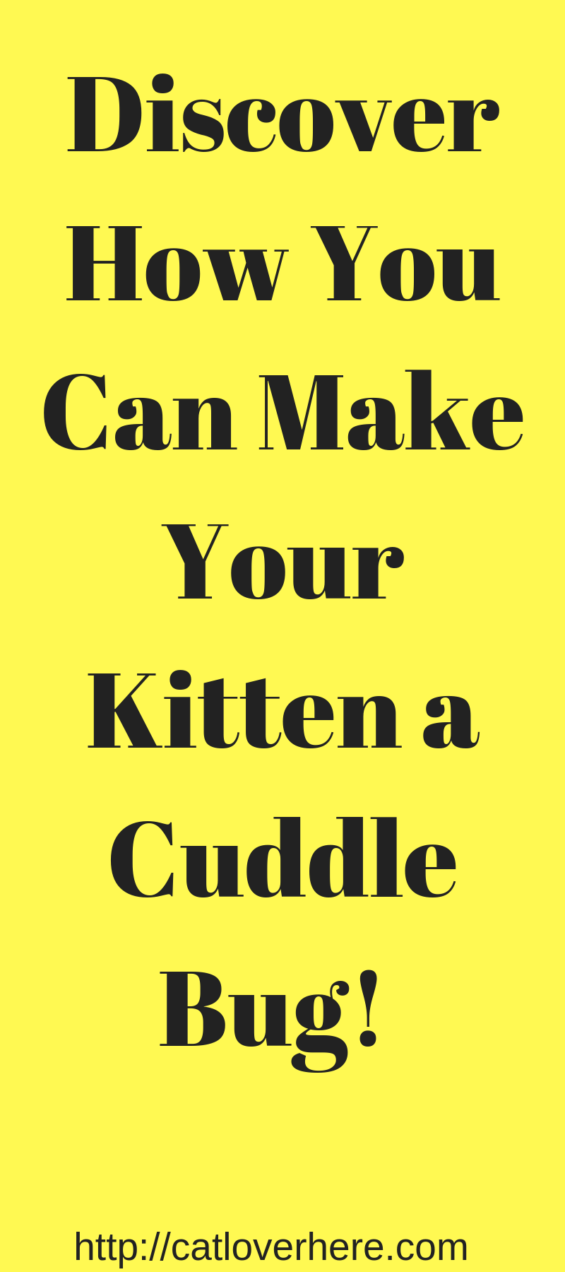 How To Raise a Kitten To Be Cuddly (Who Else Wants a