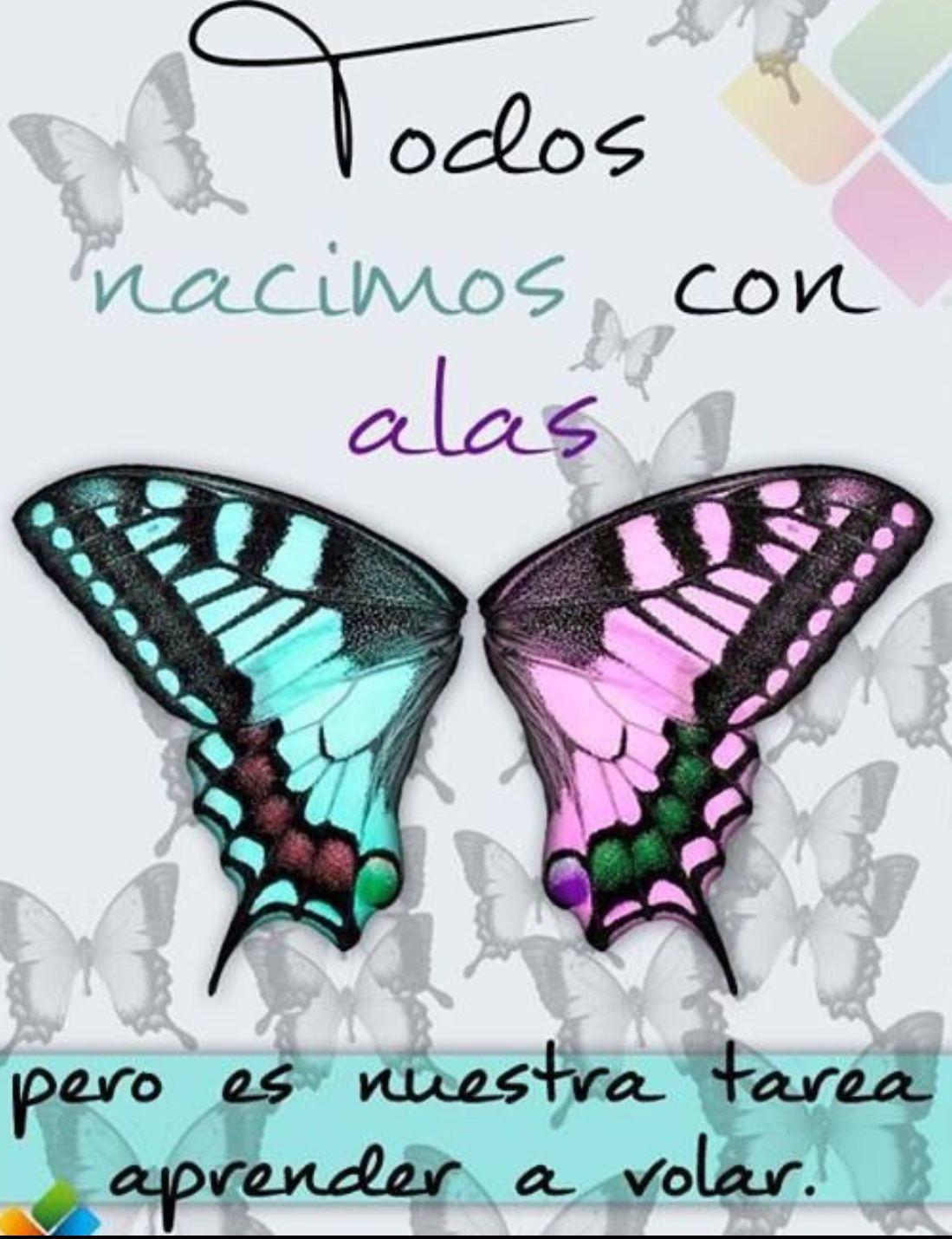 Es Nuestra Tarea Aprender A Volar Frases Mariposas Frases