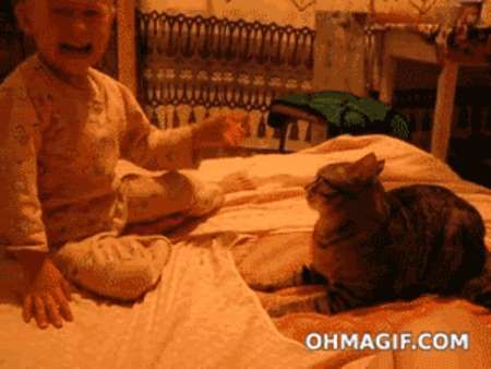 Vicious Cat Is Vicious…