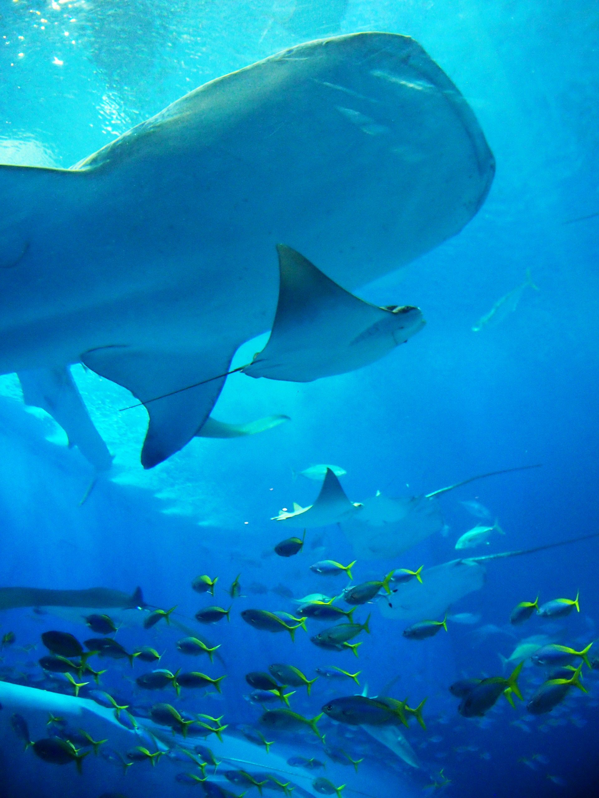 Fish aquarium japan - Fish Okinawa Churaumi Aquarium Japan
