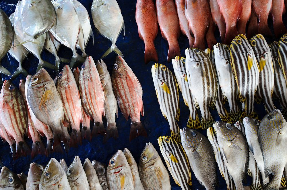 Reef Fish For Sale At The Paotere Fish Market Makassar Sulawesi Indonesia Matthew Oldfield Photography Fish For Sale Fish Sulawesi
