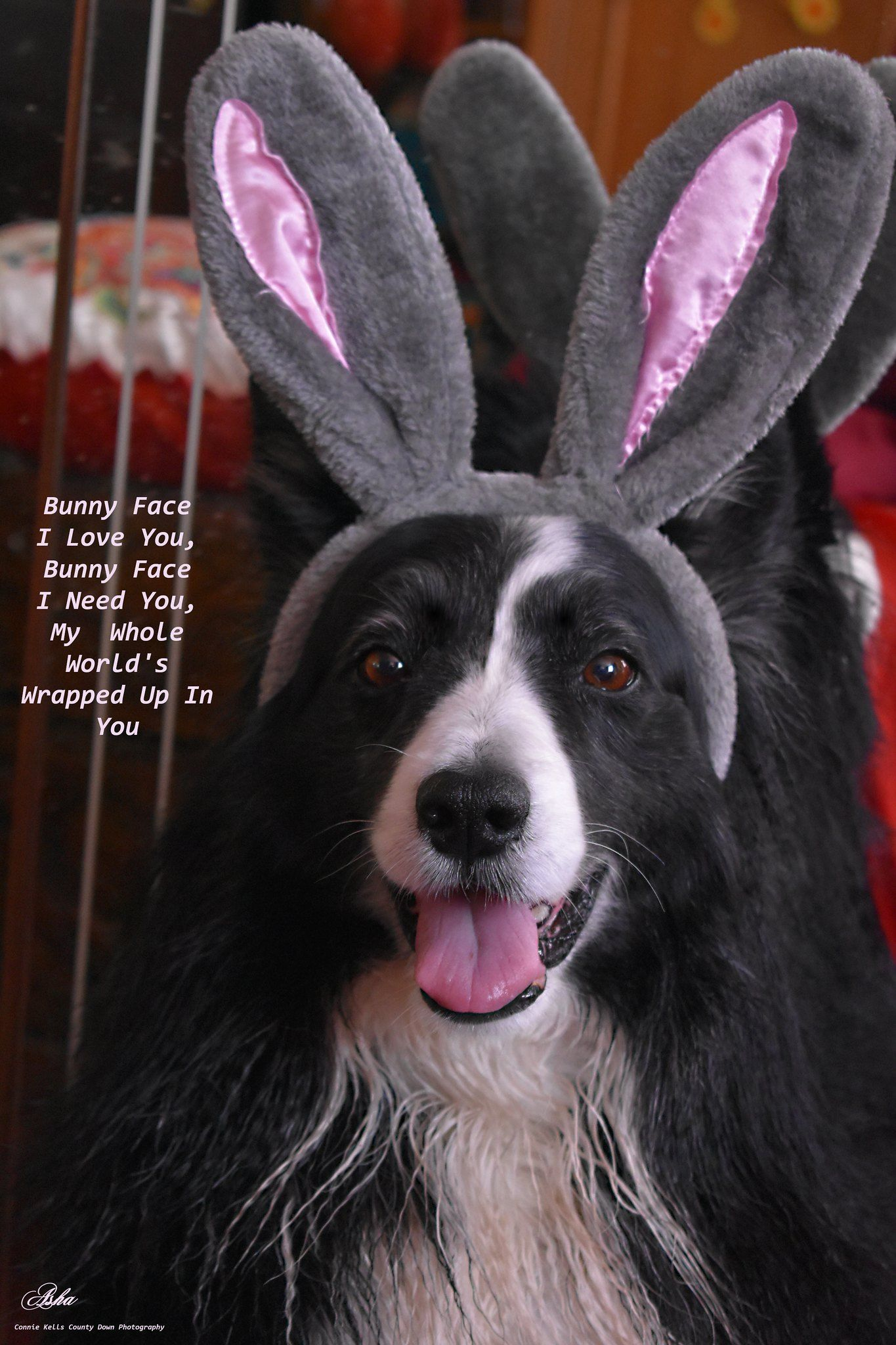 Bunny Face I Love You Cute Cats Dogs Easter Pictures Bunny Face
