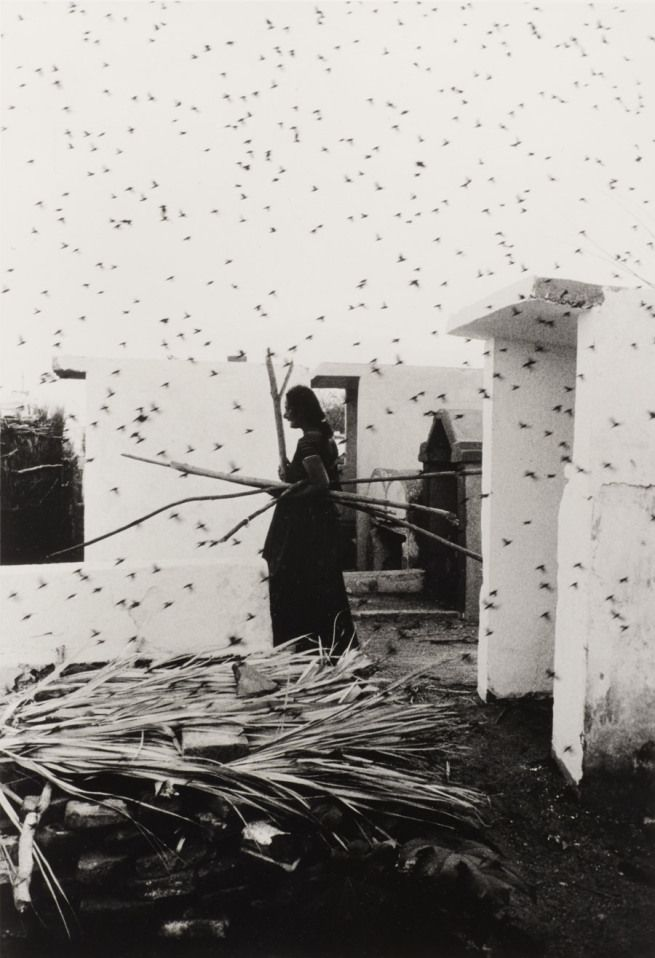 Graciela Iturbide (Born 1942, Mexico City; lives and works in Coyoacán, Mexico) 'Cementerio (Cemetery), Juchitán, Oaxaca' 1988