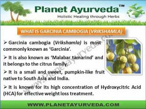 What Is Garcinia Cambogia Fruit Called In Hindi Garcinia