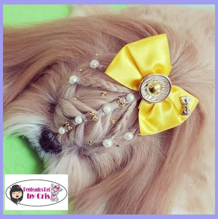 Pin em All About Animals Dog Grooming