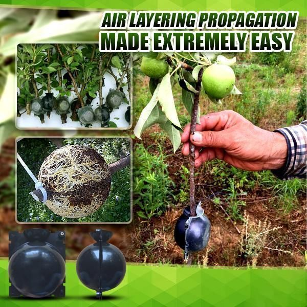 10pc Garden Air Layering Plant Rooting Ball Grafting Box Breeding Case Container