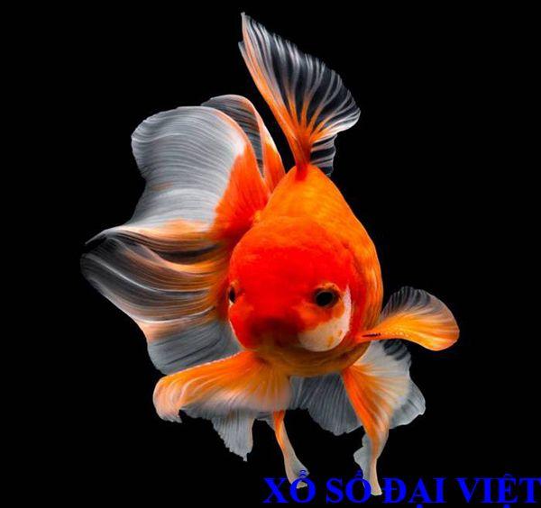 nằm mơ thấy cá vàng là điềm báo gì
