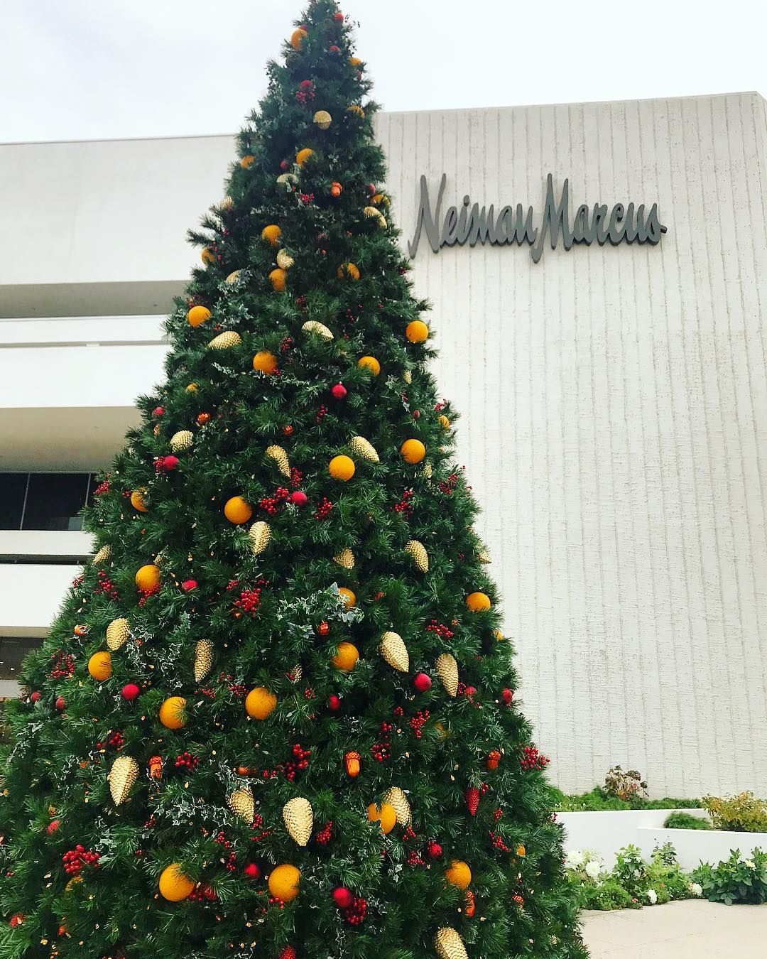 Neimanmarcus Christmas.Giant Christmas Tree Outside Of Neiman Marcus Store At