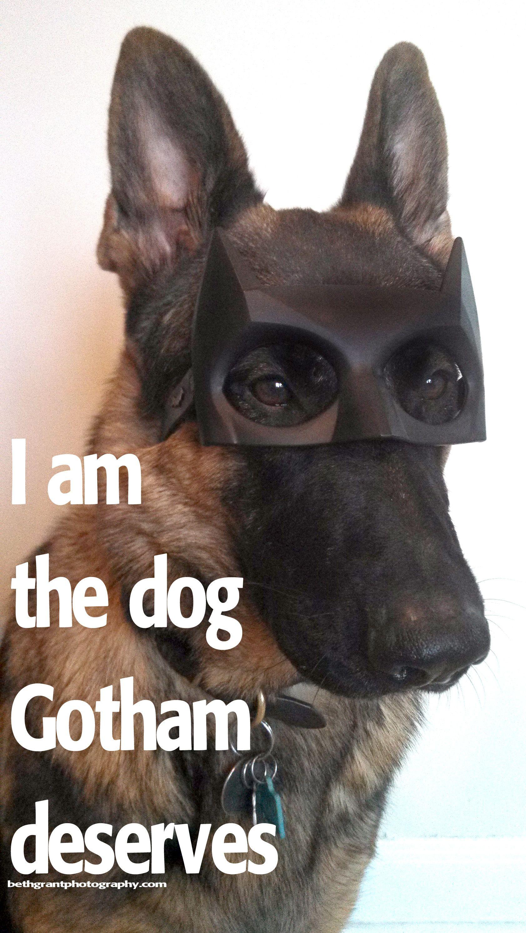 Batdog German Shepherd I Am The Dog Gotham Deserves German Shepherd Dogs Shepherd Dog German Shepherd Memes