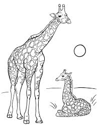 Printable Giraffe Coloring Pages For Adults Google Search In 2020 Giraffe Coloring Pages Coloring Pages Adult Coloring Pages