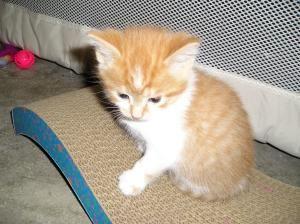 Adopt Squeakers On Petfinder Orange And White Cat Mother Cat Squeaker