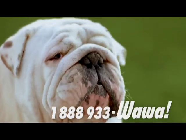 Wawanesa Boum Chica Boum French Bulldog Dogs Animals