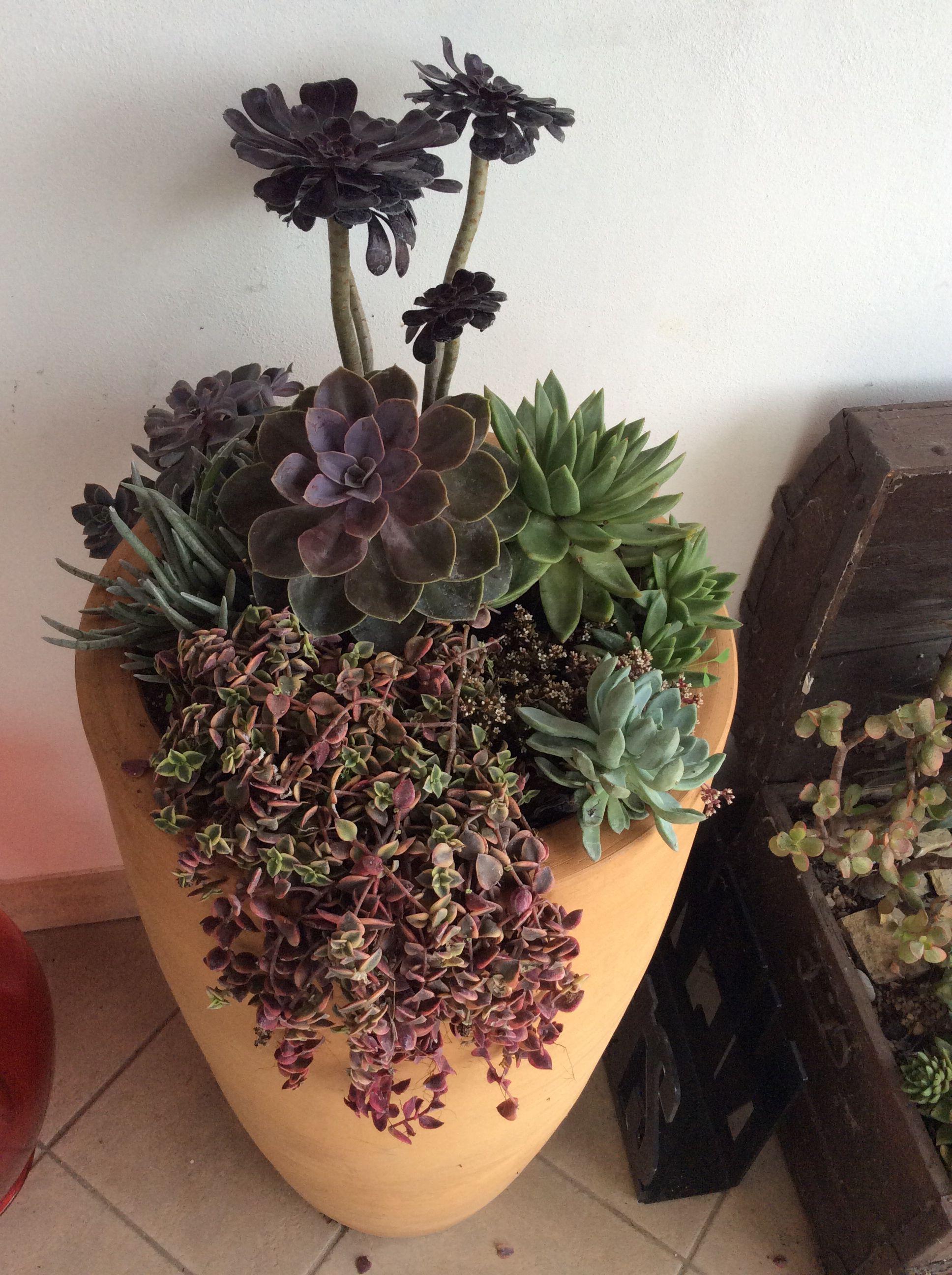 I Love Succulents Composizione Piante Grasse Con Immagini