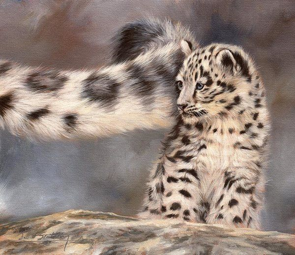 Snow Leopard Tail Print by David Stribbling.