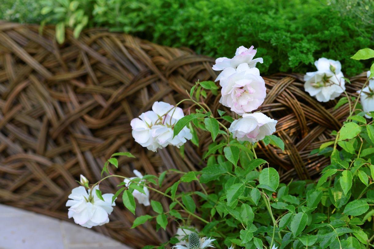 Un jardin de fleurs blanches | fleurs et jardins | Garden Design ...
