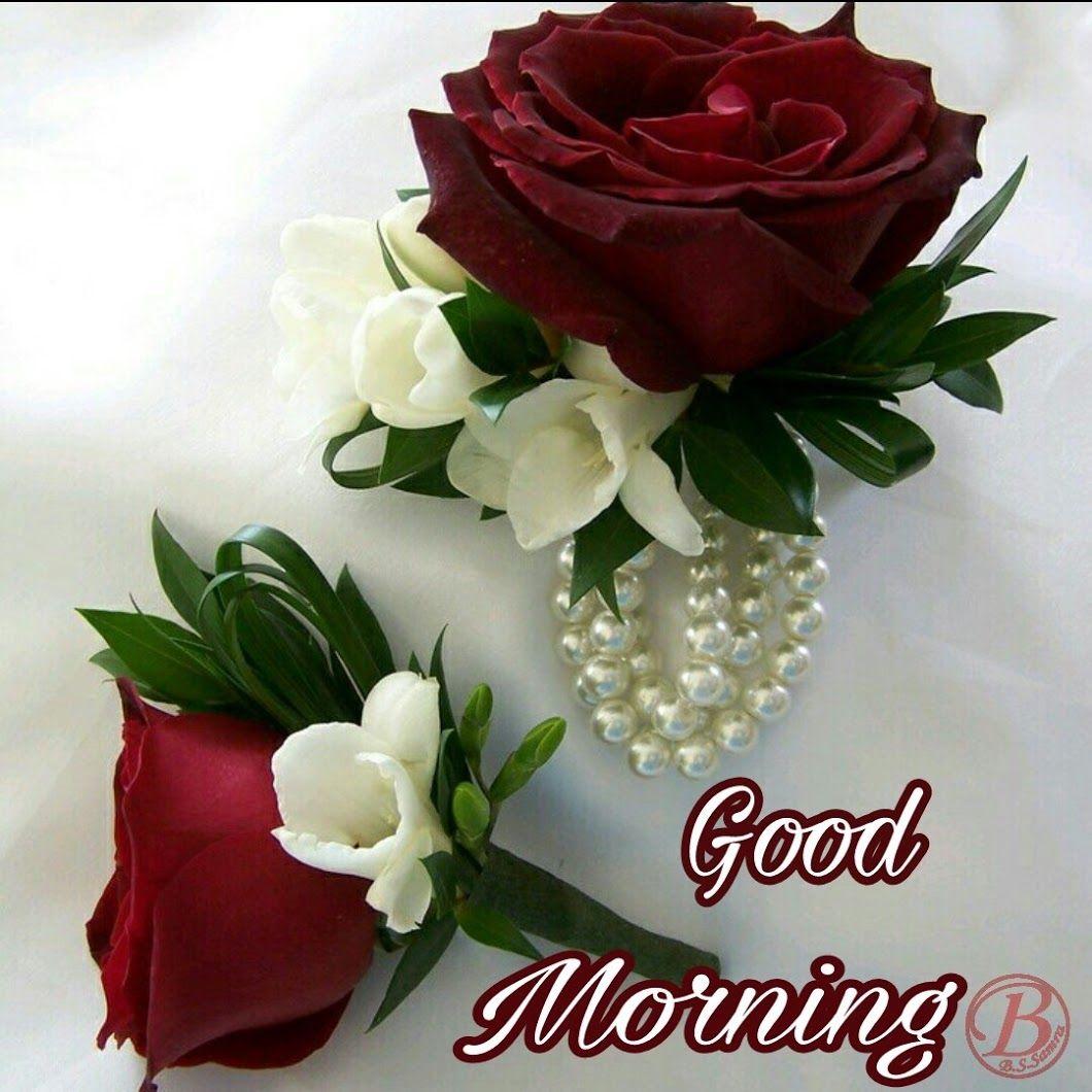 Sign In Good Morning Flowers Good Morning Flowers Pictures Good Morning Flowers Rose
