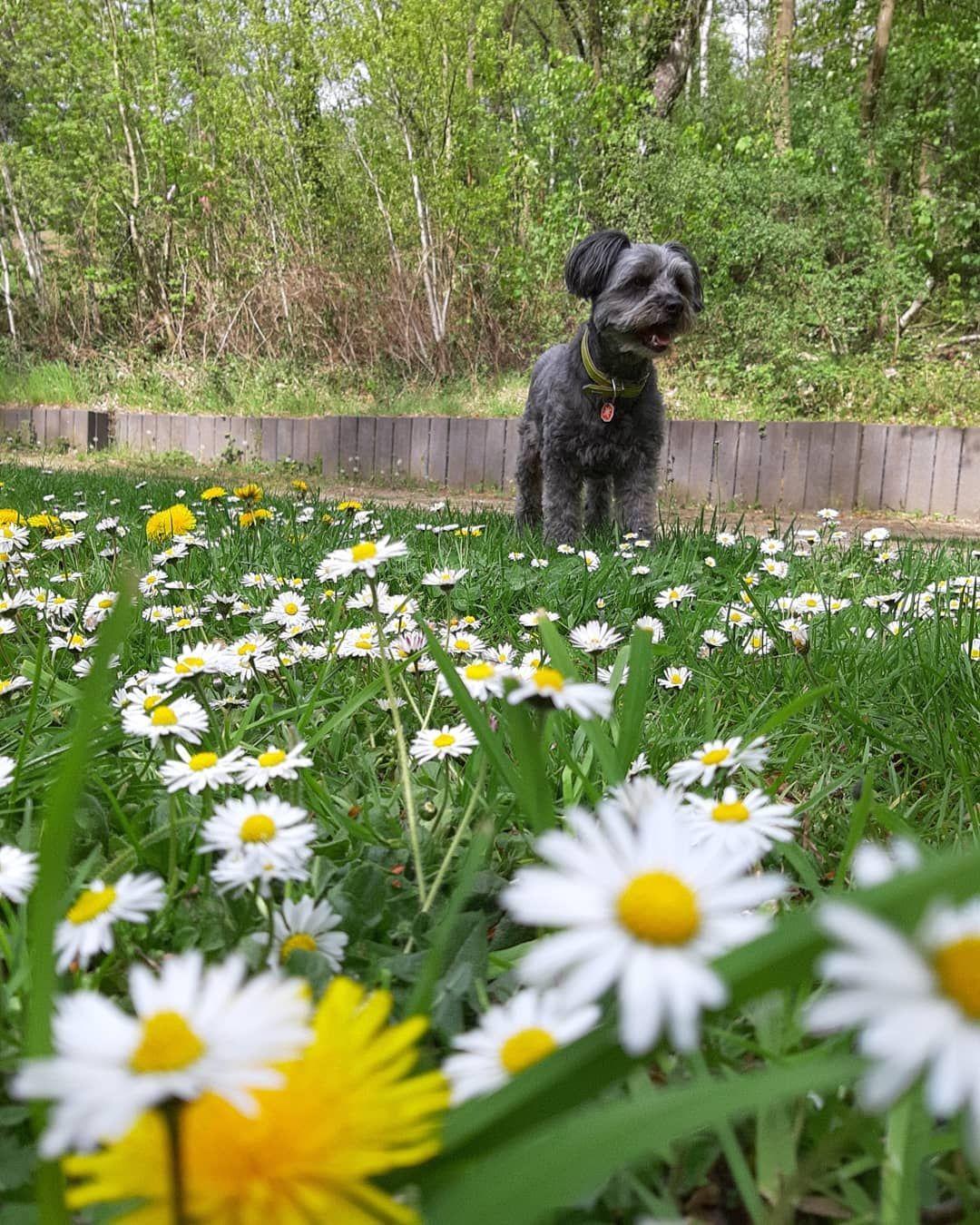 Timmy Und Die Ganseblumchen Garten Schwimmen Prallyundpraline Nature Natur S Garten Deko Gartengestaltung Gartenliebe